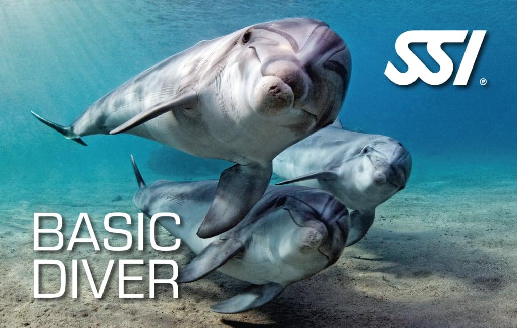 Курсы дайвинга Try Scuba Diving and Basic Diver