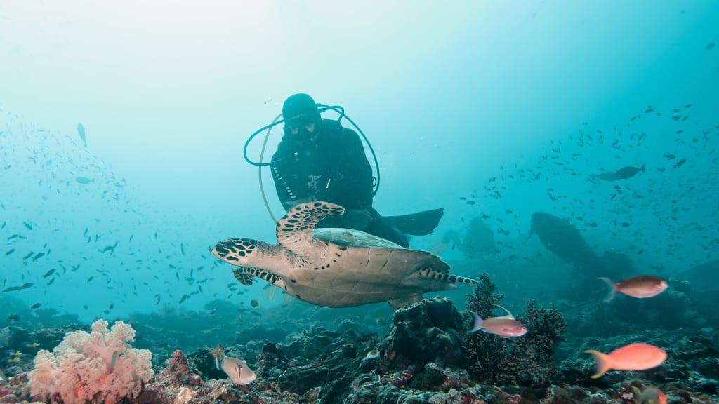 Dive Nusa Penida - fun diving trips