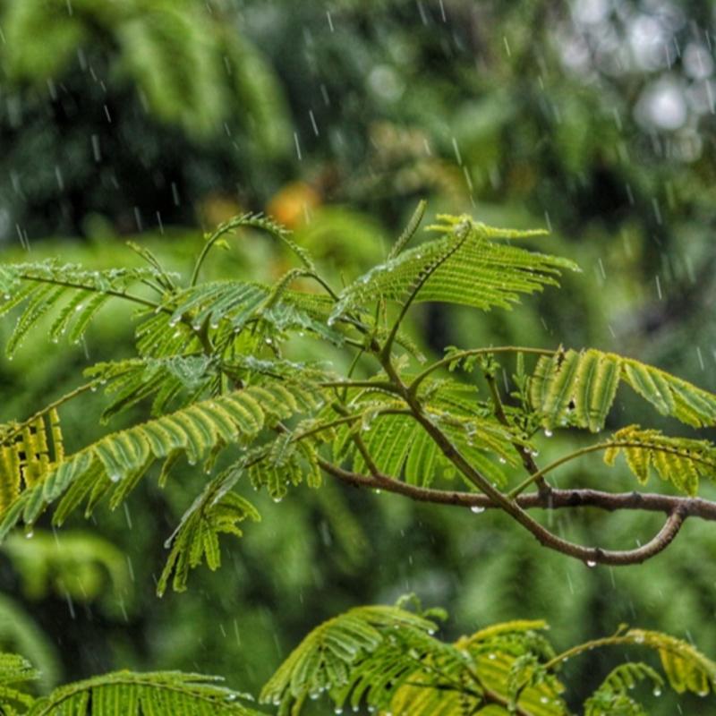 Rain & Thunder Sound Therapy