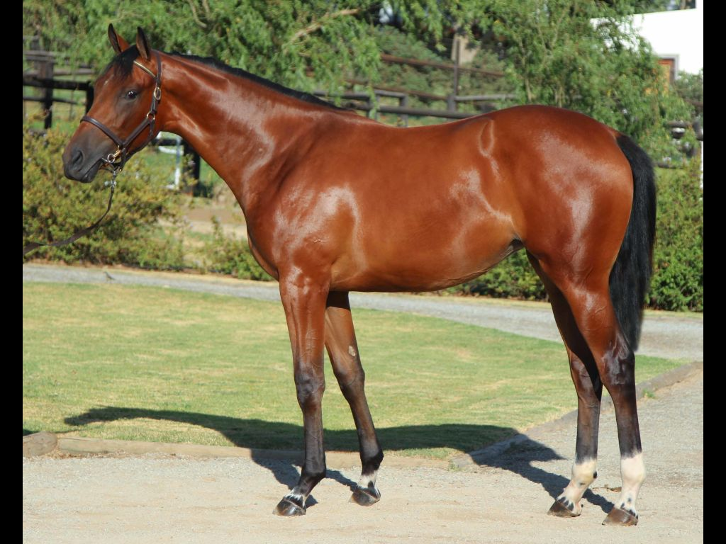 2018 Cape Premier Yearling Sale on Cape Thoroughbred Sales