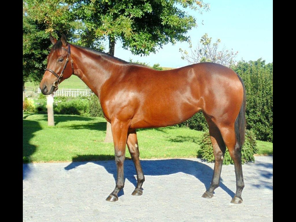 2016 Emperors Palace Select Yearling Sale on Cape