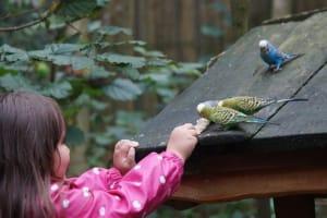 hobi burung