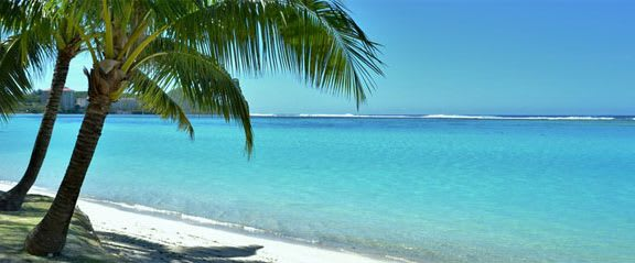 Palmtree on sandy beach in Caribbean