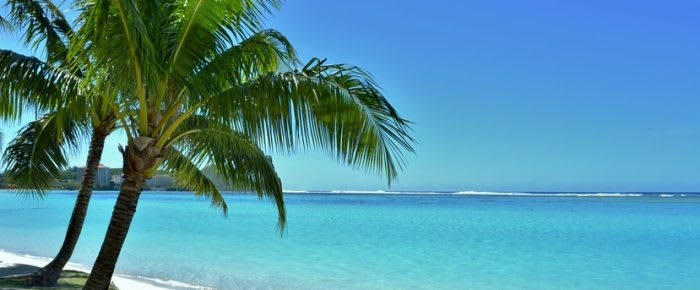 Palmtrees on the beach in the Caribbean