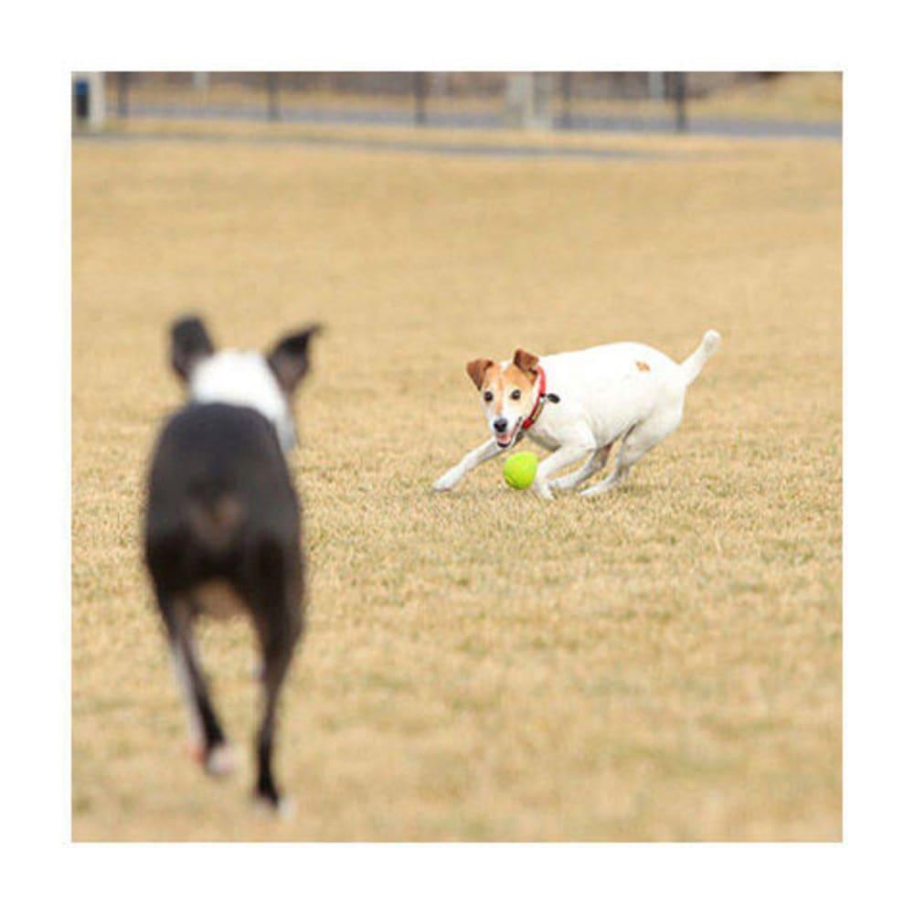 RUFFWEAR TurnUp Dog Toy - GREEN