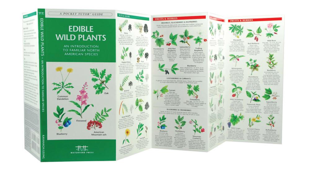 Edible Wild Plants - NONE