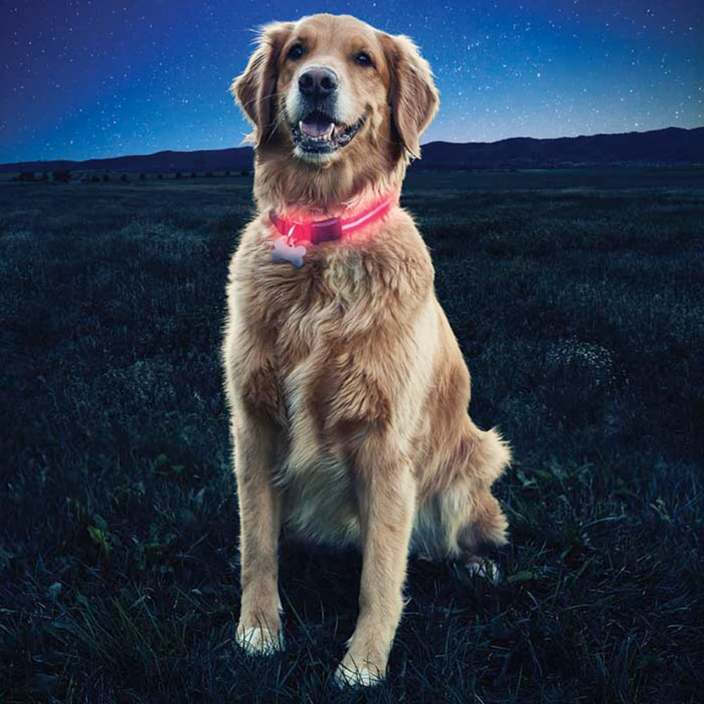 NITE IZE Nite Dawg LED Dog Collar - RED