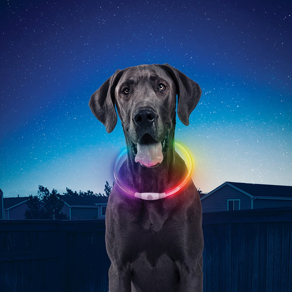 NITE IZE Nitehowl Dog's Rechargeable Safety Necklace - NO COLOR
