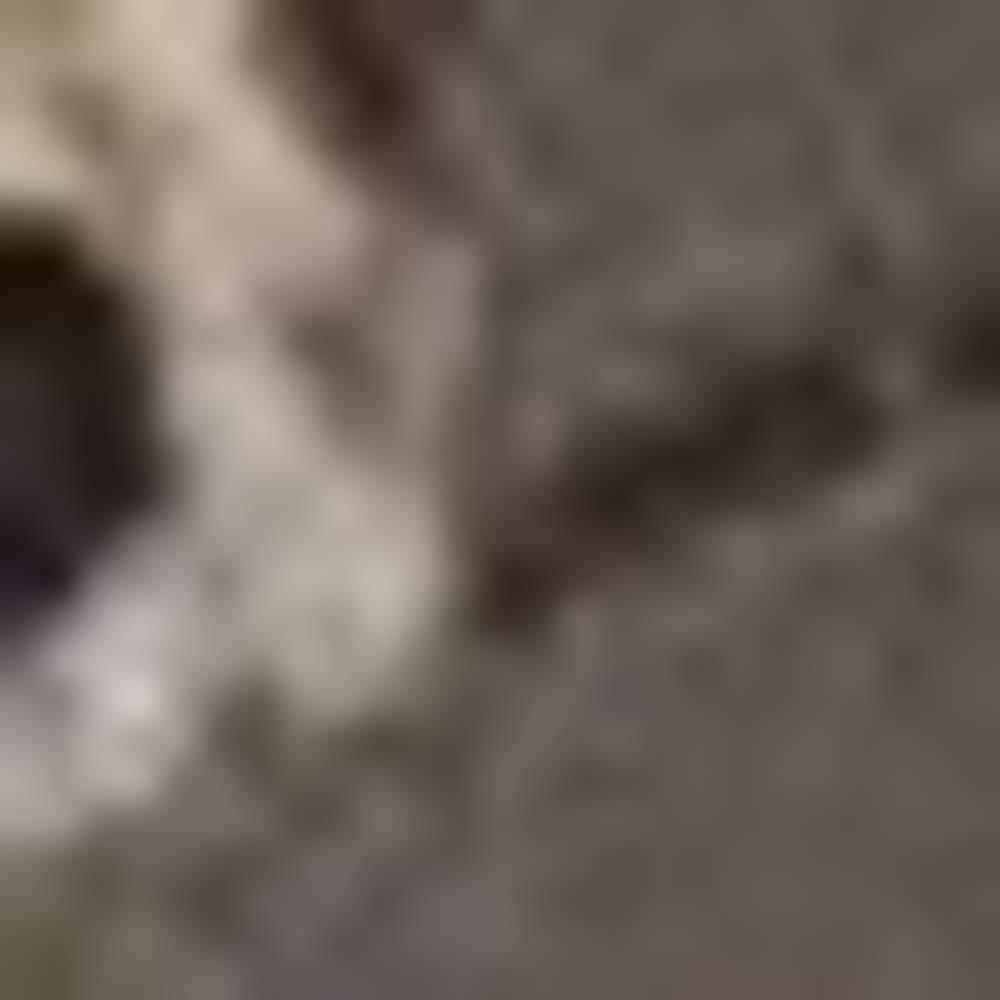 OLIVE J52922