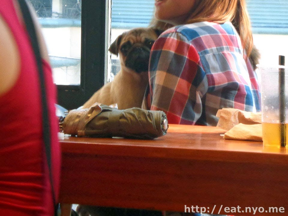 Barkin' Blends Dog Cafe