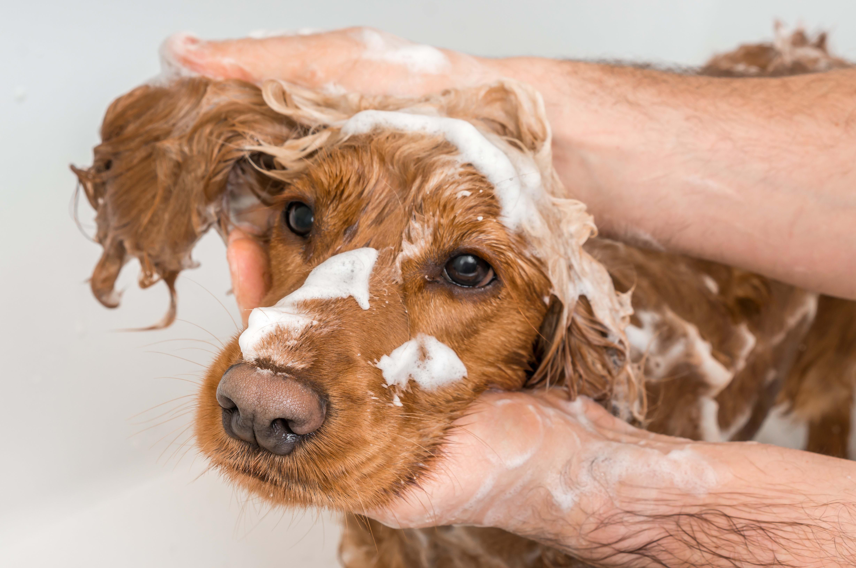 Petspiration: Dog Bath
