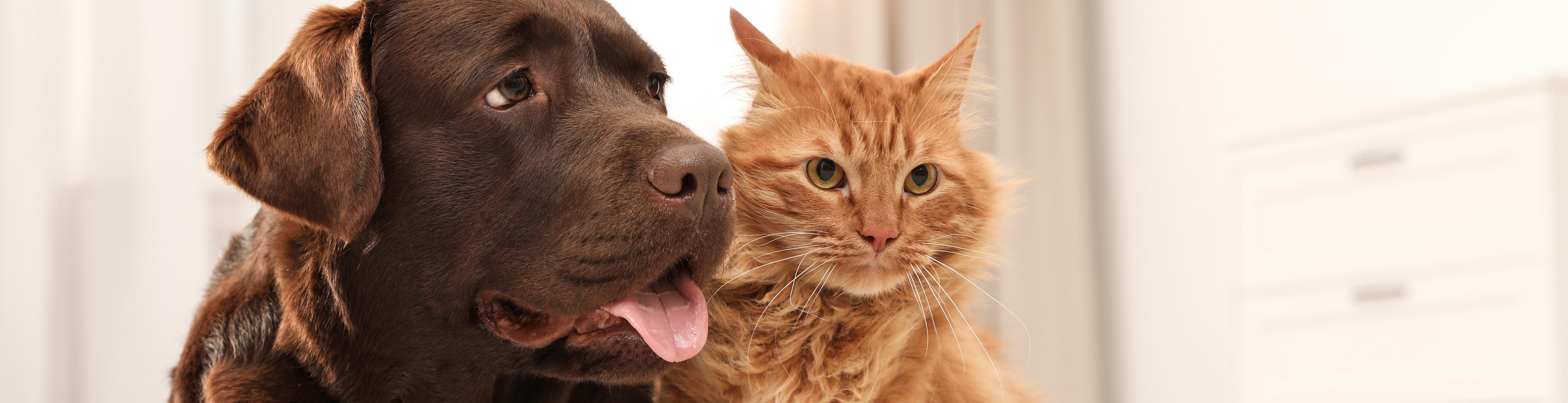 Pet Friendly Spaces