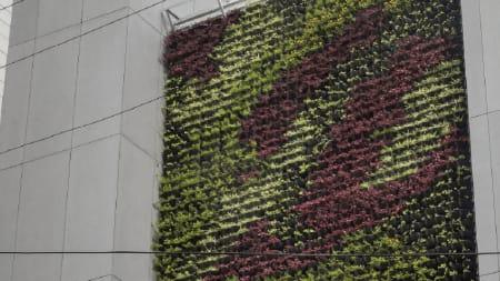 Imagem sobre Como e onde aplicar biofilia na arquitetura?