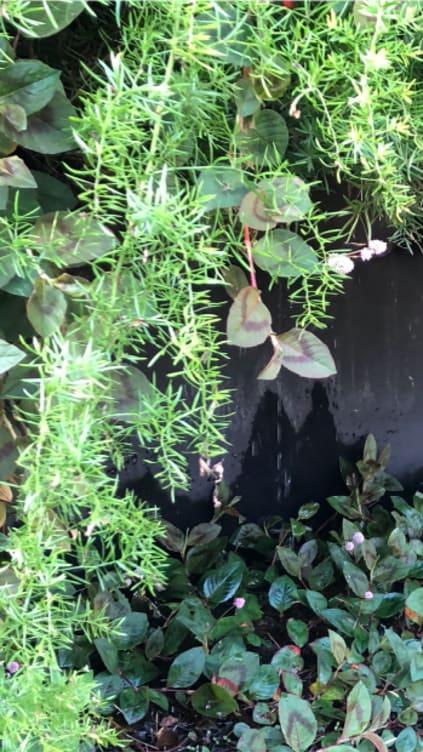 Imagem sobre Muro de Arrimo