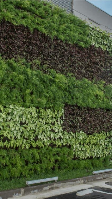 Imagem sobre Muro Vegetado