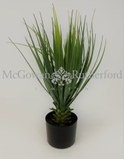 Ornamental Potted Yucca Plant