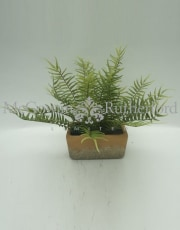 Ornamental Potted Fern Plant in Brick Style Pot