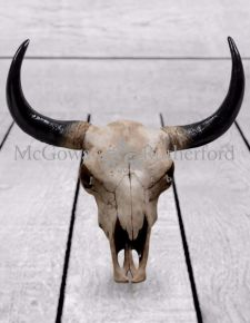 Large Bison Design Skull Wall Head