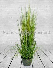 Ornamental Grasses in Galvanised Pot - Style 2