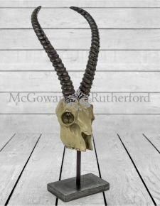 Decorative Antelope Skull on Stand
