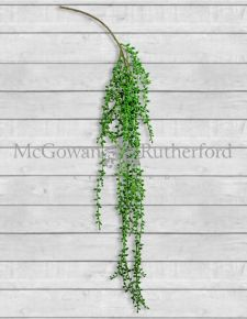Ornamental Hanging Vine (to be bought in 12s)