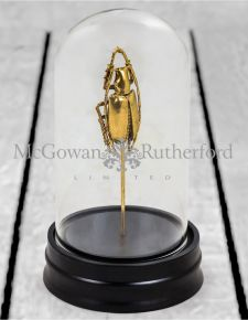 Gold Beetle Specimen in Glass Dome