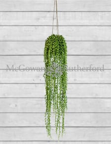 Ornamental Hanging String of Pearls Vine Arrangement (to be bought in qtys of 6)