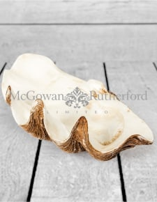 Extra Large Clam Shell Decorative Bowl