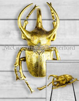 Extra Large Gold Beetle Wall Decor