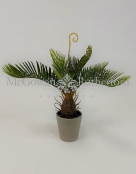 Ornamental Potted Cycad Plant