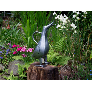 Singing Duck Watering Can