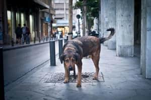 Stray Dogs in downtown Athens / Αδέσποτα σκυλιά στο κέντρο της Αθήνας
