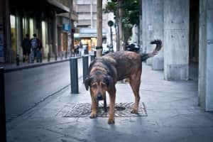 Stray Dogs in downtown Athens / Αδέσποτα σκυλιά στο κέντρο της Αθήνας