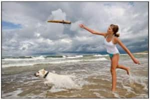 istock_000007071840xsmall dog swim