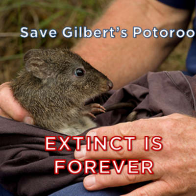 Save Gilbert's Potoroo