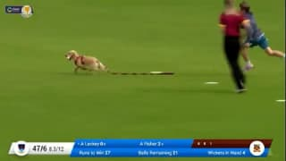 Watch! Dog stops play, enters cricket ground and grabs ball in a hilarious video