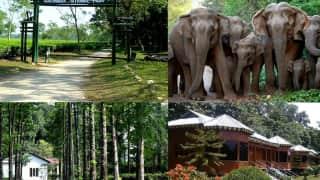 Dooars Tour: পুজোয় ঘুরে আসুন ডুয়ার্সের গরুমারা,চাপড়ামারির জঙ্গল, পাহাড়,জঙ্গলের কম্বো অফার