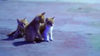 China kills housecats
