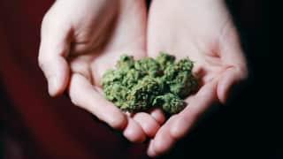 Use of Marijuana in teens: टीनएजर्स में क्यों आम है गांजे का सेवन? जानिये क्या हैं इसके साइड-इफेक्ट्स