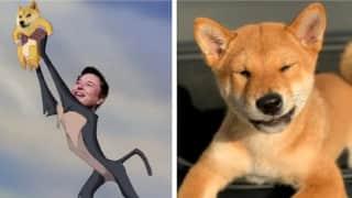 SHIB vs Doge crypto craze