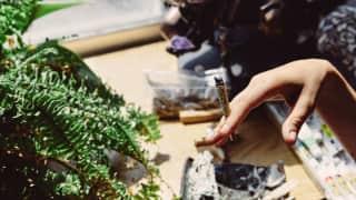 Cannabis and Mental Health: भांग का इस्तेमाल करने वालों में मानसिक बीमारियों का ख़तरा 7 गुना अधिक