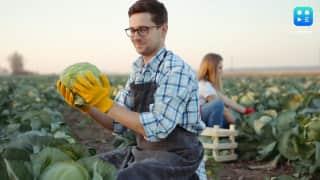 खेत में सब्जी तोड़ने की मजदूरी 63 लाख रुपये, देखें किस कंपनी ने दिया ये ऑफर