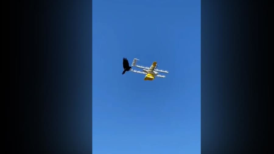 Watch: Bird vs Drone caught on camera, how the angry bird won over delivery drone