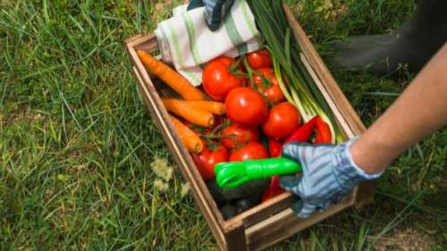 World Food Safety Day 2021: 'Safe food today for a healthy tomorrow'