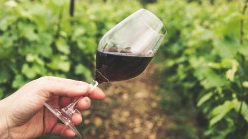 It's wine o'clock! Non-alcoholic wine just as good for your heart as the real thing