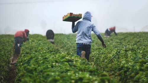 Tech solutions for farming