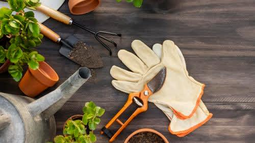 Can gardening help fight your mental blues?