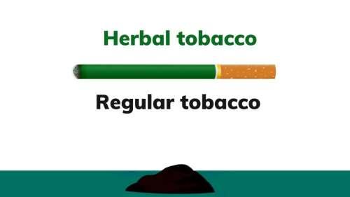'Ganja lookalike': all about herbal tobacco that Nawab Malik says was found by NCB