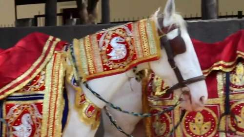 The Internet is divided on PETA India's take on using horses at weddings