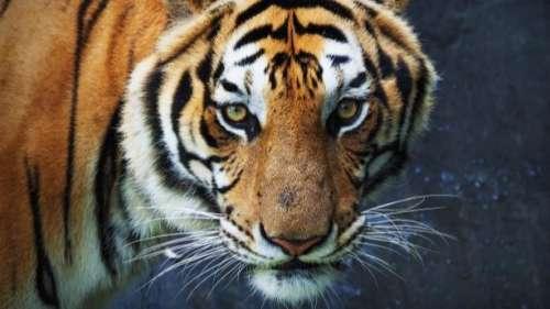 3 national parks in Madhya Pradesh now offer night safaris